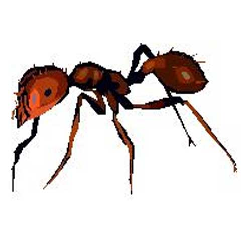 Commercial ant killer for lawns